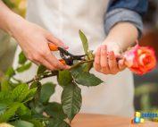 Curso de Floristeria, aprende a hacer arreglos florales
