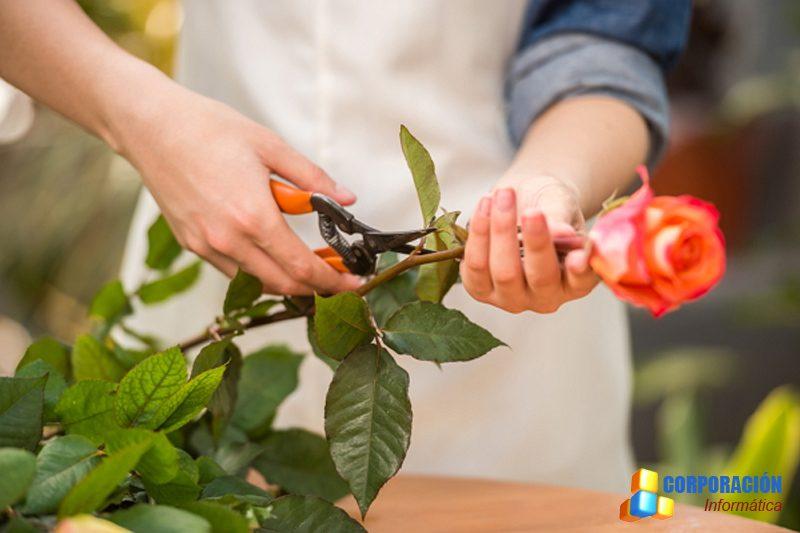 Curso Online De Floristería Aprende A Crear Arreglos Florales